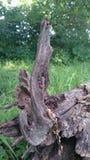 Деревянный выхват Стоковое фото RF