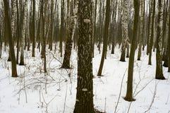 Деревянный гриб на расшиве дерева в лесе зимы Стоковое Фото
