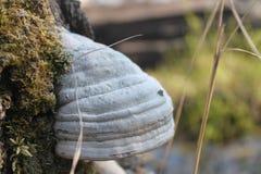 Деревянный гриб Стоковое фото RF