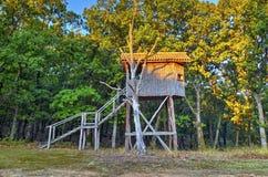 Деревянный дом в ветвях дерева стоковое изображение rf