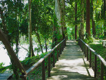 Деревянный лес моста на национальном парке Phang Nga khaolak-Lumru, Таиланде Стоковые Изображения RF