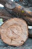 Деревянный журнал и зеленые саженцы на пне дерева жизнь принципиальной схемы новая Стоковое Фото
