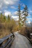 Деревянный идя путь на парке Стоковое фото RF
