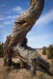 Деревянный динозавр Стоковое фото RF