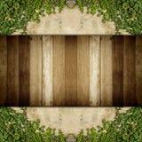 Деревянный и зеленый завод creeper на стене для текстуры Стоковая Фотография