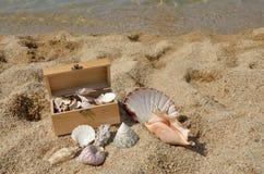 Деревянный комод вполне Seashells Стоковое Изображение RF