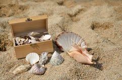 Деревянный комод вполне Seashells Стоковая Фотография