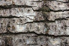 Деревянный конец предпосылки текстуры вверх по 5 Стоковые Фото