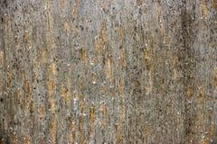 Деревянный конец предпосылки текстуры вверх по 4 Стоковые Изображения