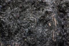 Деревянный конец предпосылки текстуры вверх по 10 Стоковые Изображения