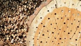Деревянный кусок при одичалые пчелы летая перед временем гостиницы насекомого весной мужские bicornis Osmia видеоматериал