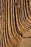 Деревянный макрос предпосылки Стоковое Изображение