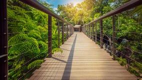 Деревянный мост в глубокой предпосылке леса стоковая фотография