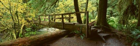 Деревянный мост в дождевом лесе Hoh стоковые изображения