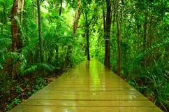 Деревянный мост в лесе мангровы Стоковые Изображения RF