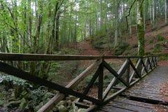 Деревянный мост в лесе около станции Vizzavona, trekking трассы GR20, Корсики Стоковая Фотография