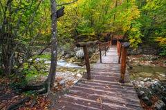Деревянный мост в лесе осени Стоковые Изображения