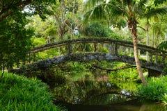 Деревянный мост в зеленом лесе Стоковое Изображение RF