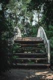 Деревянный мост в лесе стоковая фотография rf