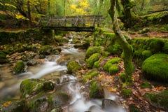 Деревянный мост в национальном парке Geres Стоковая Фотография RF