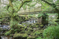 Деревянный мост в пуще Стоковое Фото