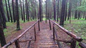 Деревянный мост в сосновом лесе акции видеоматериалы