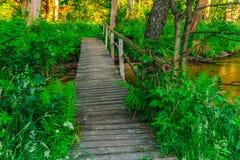 Деревянный мост над заводью Стоковые Фотографии RF