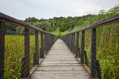 Деревянный мост над болотом Стоковая Фотография