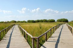 Деревянный мост на злаковике Стоковые Изображения