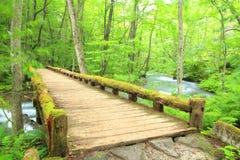 Деревянный мост над потоком Oirase Стоковое Изображение