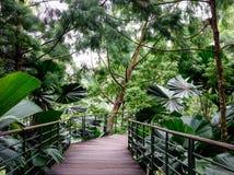 Деревянный мост на саде в Сингапуре стоковые изображения rf