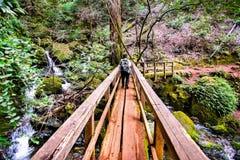 Деревянный мост на следе катаракты в водоразделе Mt Tamalpais, области Marin County, северной San Francisco Bay, Калифорния стоковые изображения