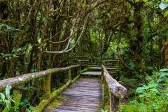 Деревянный мост на следе природы angka в национальном парке inthanon doi Стоковые Фотографии RF