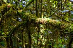 Деревянный мост на следе природы angka в национальном парке inthanon doi Стоковые Изображения