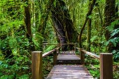 Деревянный мост на следе природы angka в национальном парке inthanon doi Стоковое Изображение