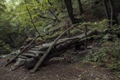Деревянный мост окруженный растительностью Стоковое Фото