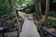Деревянный мост дорожки в лесе Стоковое Изображение