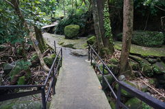 Деревянный мост дорожки в лесе Стоковая Фотография