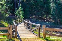 Деревянный мост пересекая над заводью Стоковая Фотография