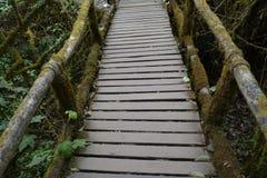Деревянный мох моста в лесе Стоковые Изображения RF
