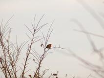 деревянный на зимы неба ветви вытаращиться белой мирный стоковое фото