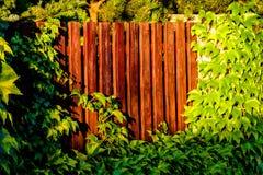 Деревянный обнести зеленый цвет Стоковая Фотография RF