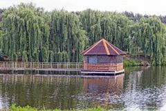 Деревянный дом на воде с зелеными деревьями на пляже Стоковое фото RF
