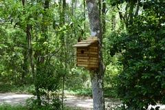 Деревянный дом птицы на дереве в саде бабочки Стоковое Изображение RF