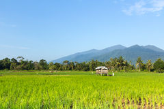Деревянный павильон в рисовых полях на Sematan стоковое фото rf