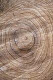 Деревянный пень объезжает дерево текстуры Стоковая Фотография