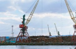 Деревянный переход, торговля рыбного порта Калининграда, гавань вытягивает шею стоковое фото rf