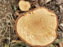 Деревянный подготавливайте на wintertime Стоковые Изображения RF