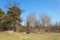 Деревянный подготавливайте на зима Экологическое деревянное топление Работа в лесохозяйстве Стоковое фото RF