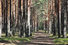 Деревянный полдень Стоковое Изображение RF